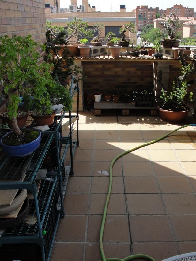 silvestrys bonsai. vista general terraza